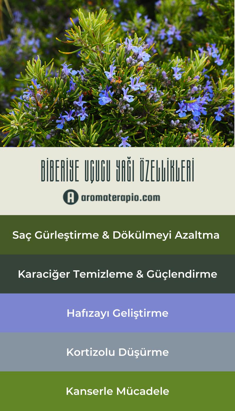 Biberiye Uçucu Yağı Faydaları - aromaterapio.com - Infografik