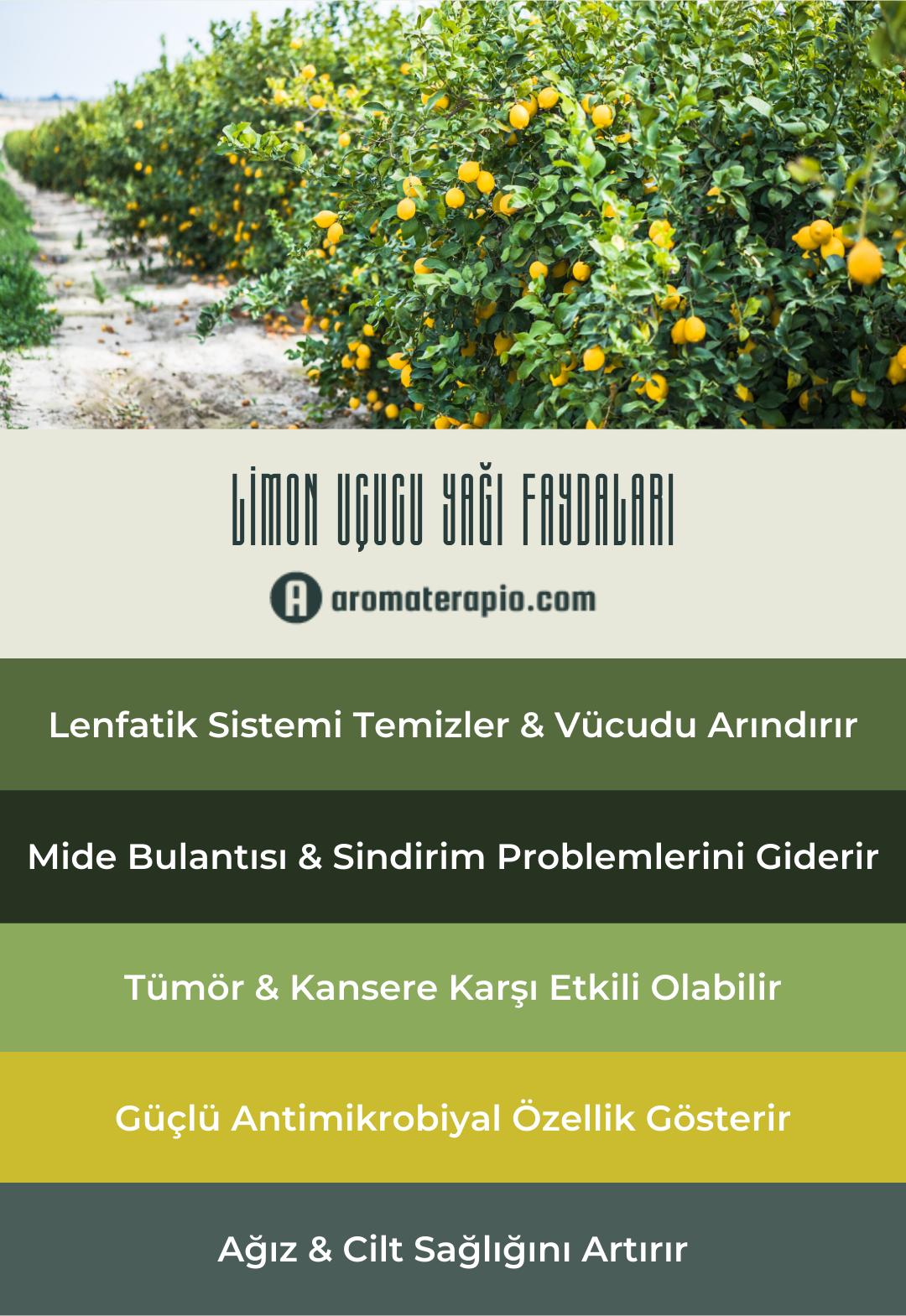 Limon Uçucu Yağı Faydaları Infografik