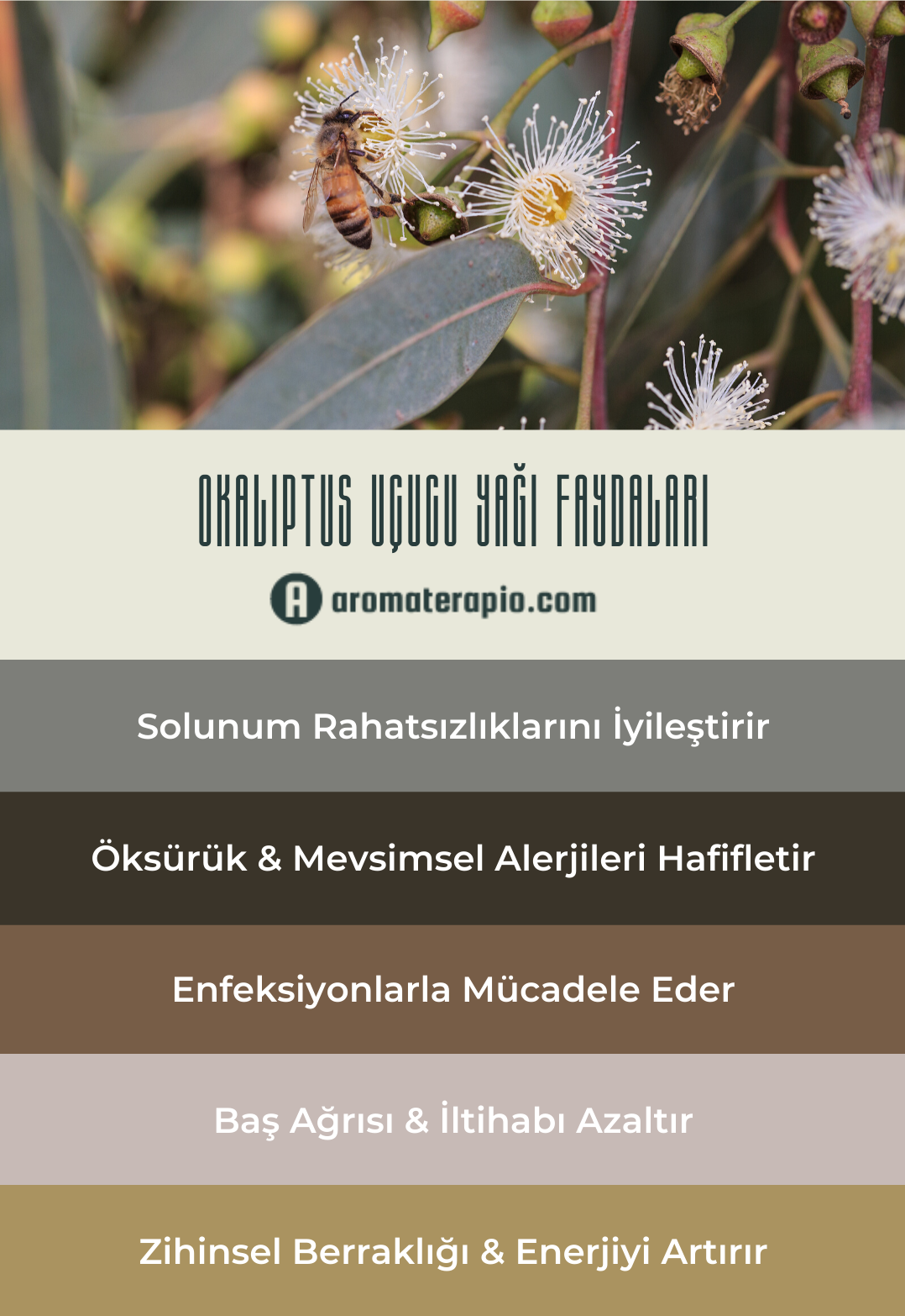 Okaliptus Uçucu Yağı Faydaları Infografik