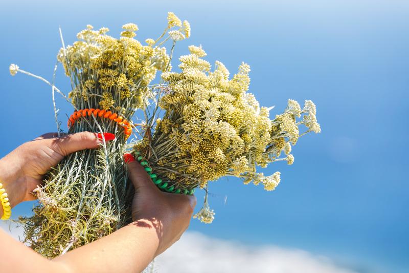 Helichrysum uçucu yağı