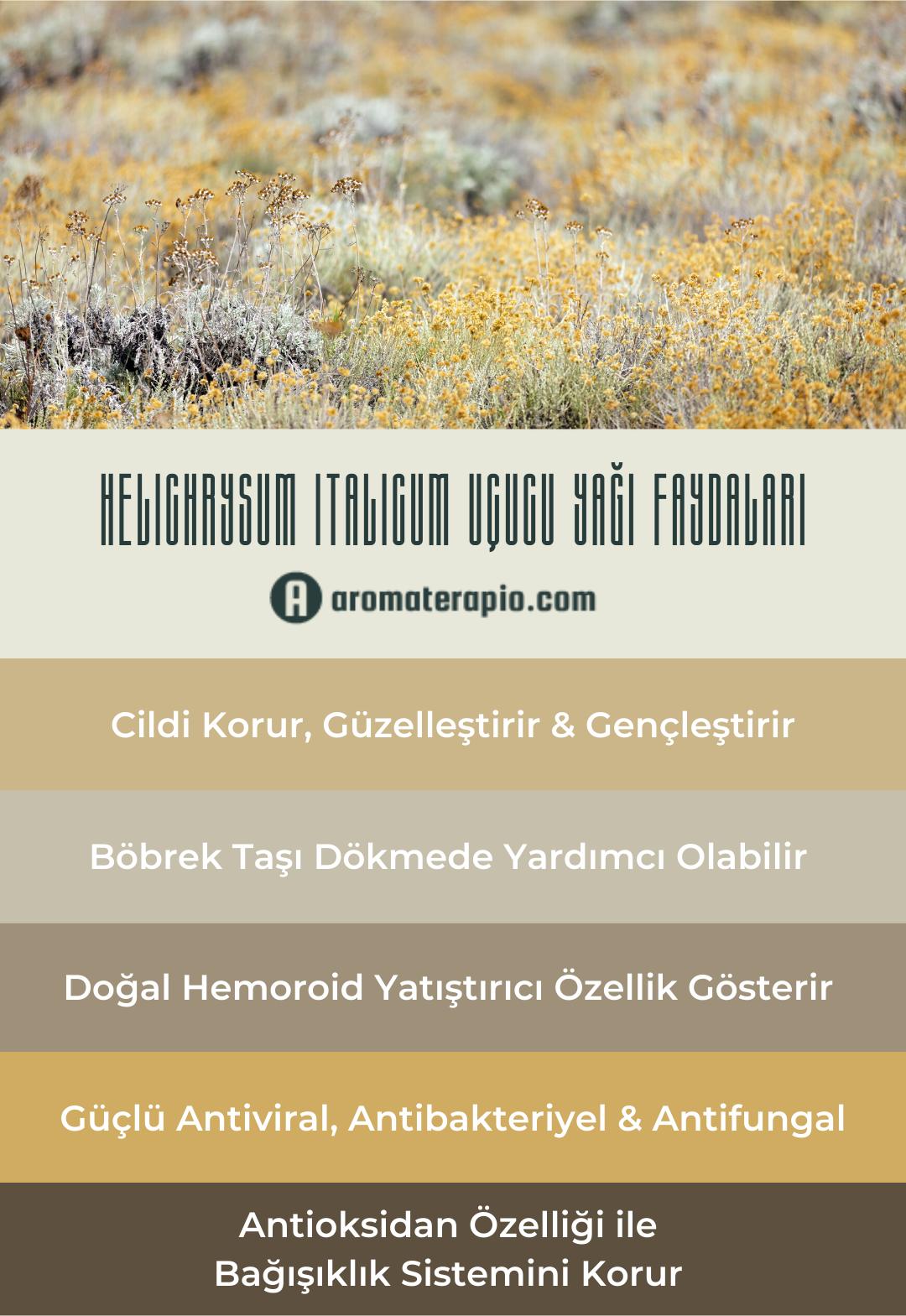 helichrysum italicum Uçucu Yağı Faydaları Infografik