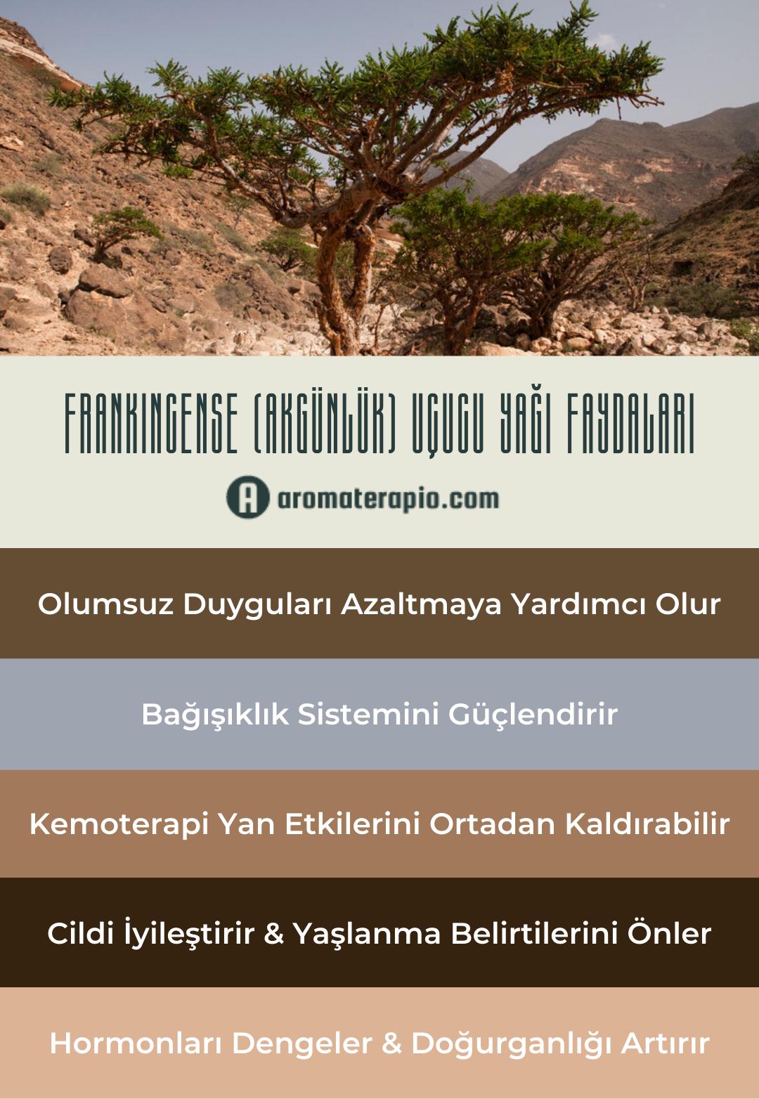 Frankincense Uçucu Yağı Faydaları Infografik